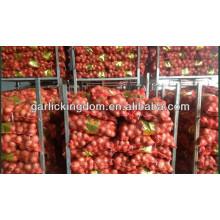 Cebola fresca nova corp / 20kg cebola fresca / cebola amarela à venda