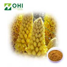 Cistanche Tubulosa Extract Echinacoside and Verbascoside