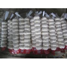 Jordanian Market Hot Sales Normal White Fresh Garlic