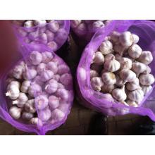 5cm, Normal White Garlic