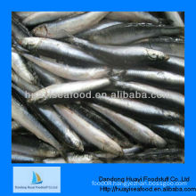 frozen anchovy fish