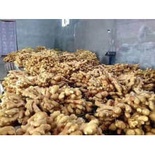 Organic Ginger From China High Quality Air Dried Ginger