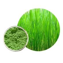 Hochwertiges Barly Grass Pulver