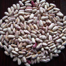 Chinese New Crop Light Speckled Kidney Bean