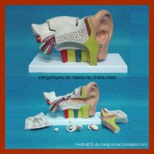 Medizinisches mittleres linkes anatomisches Ohrmodell (ERU Typ 6 PCS)