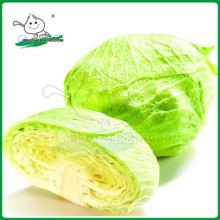 Col verde fresca / Repollo de China / Col de nueva cosecha
