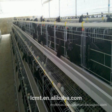 Fully automated chicken cage equipment for livestock farms around the world