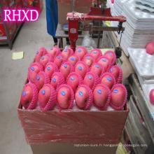 Meilleur prix pomme origine Fuji Chine Chine