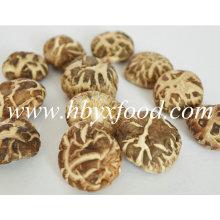 2.5-3cm Fresh Dried Tea Flower Shiitake Mushroom