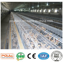 Automatic Poultry Farm Pullet Cages Equipment