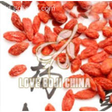 Perhatian Picked Organic Goji Berries Delicious