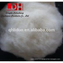 Fibre de laine de cachemire brute et cardée de 38 mm