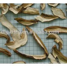 dried boletus edulis mushroom