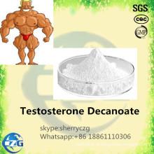 Testosterona crua Decanoate do pó dos esteroides da construção do músculo
