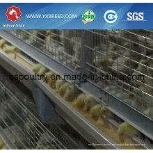 Lange Lebensdauer verzinkt H Typ Aufzucht Huhn Käfig