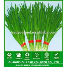 Proveedor de semilla de cebolleta de puerro NLE01 Ecy Quality