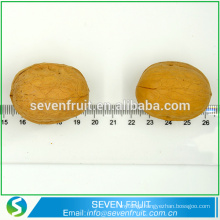 Natural Dried Walnut Nut delicious nuts walnut unshelled walnut in shell GRADE A NUTS for sale