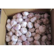 Alho branco normal (6.0cm) para exportação