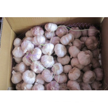 Normal White Garlic (6.0cm) for Exporting