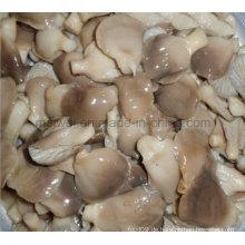 Pilz Dose Abalone Pilz mit günstigen Preis