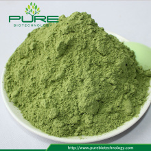 Bulk supply Organic wheatgrass powder with best price