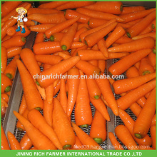 New Crop China Fresh Carrot Export