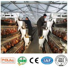 Jaula industrial de granja de pollos para huevos de aves de corral