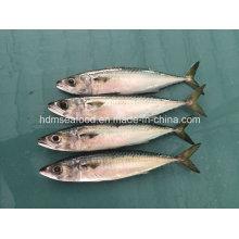 Закуска быстрозамороженная рыба-скумбрия