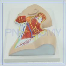 ПНТ-1633 модель 2017 самых популярных пластической анатомии нервов шеи