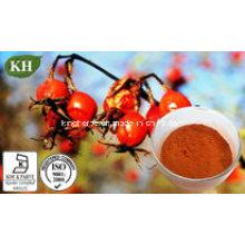 Vitamina natural C5%; Rose Hip Extract 10-30% Polyphenol,