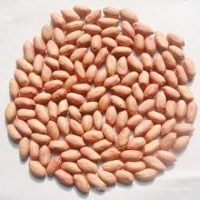 Good Quality Peanut Kernel for Sale (24/28)