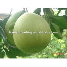 Frischen pomelo
