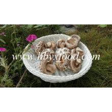 Сушеные грибы Шиитаке без стержня (белый цветок гриб)