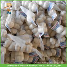Atacado de alta qualidade chinês fresco alho branco 5.5CM Mesh Bag Em Carton