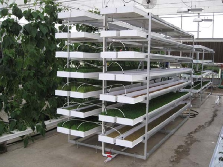 sk- Fodder ProFeed Growing System
