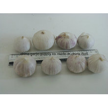 Fresh High Quality Solo Garlic