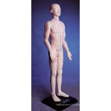 Modelo de Acupuntura do Corpo Humano