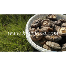 Venta caliente Smooth Surface Fresh Shiitake Mushroom