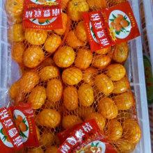Doux Nanfeng bébé Mandarn