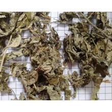 Hochwertige Artemisiae Argyi Folium