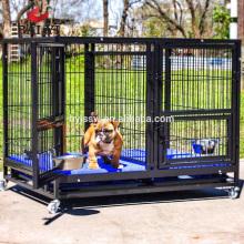 Courses de chien de haute qualité