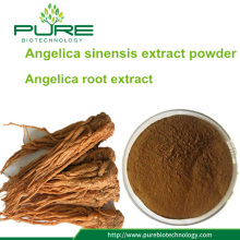 Angelica sinensis Extract Powder / dong quai powder ekstrak