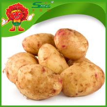 Großhandel chinesische Instant Süß Kartoffeln