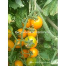 TY01 Huangzuan oval forma f1 sementes de tomate cereja amarelo híbrido