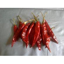 Hot peeper rojo