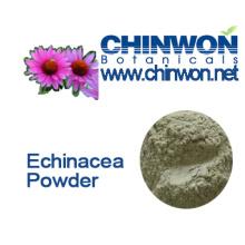 Herbal Tea Echinacea Purpurea Powder