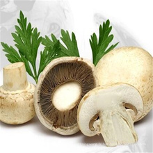 Pure Natural Plant White Button Mushroom Extract powder