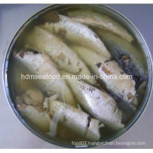 Fresh Frozen Sardine Canned for Raw Material