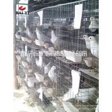 The best Selling Metal Wire Racing Pigeon Breeding Cages For Sale