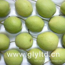 Verde de alta qualidade New Shandong Pear